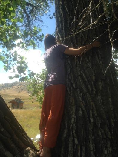 tree-love2